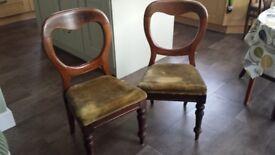 Pair of Victorian balloon back mahogany chairs