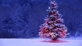 CHRISTMAS TREES- FREE DELIVERY DRUMNADROCHIT and round about's..