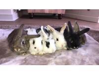6 doe baby rabbits.