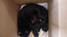 4 beautiful kittens for sale