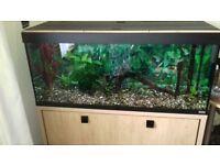 Aquarium, fish tank