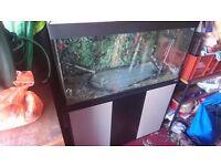 Fluval 3ft aquarium with storage cupboard / stand