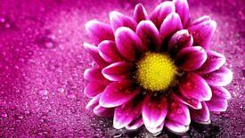Viwa Magic hands thai massage