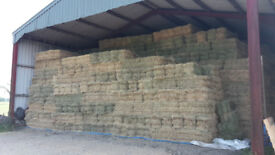 Small Quality Hay Bales