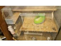 2 degus and cage.