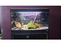 125l Fluval aquarium and accessories