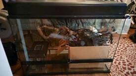 ExoTerra Vivarium 90x60x45cm chameleon setup