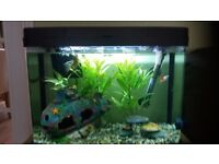 40 LITRE AQUARIUM FISH TANK FILTER LED LIGHTS SLIMLINE HEATER DECORATIONS