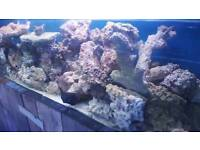 Live rock, marine fish, cleaner shrimp,