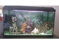 160 l fish tank with fish and full equipment