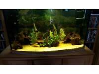 Bow fish tank