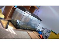 Fish tank with fish 100ltrs comes withevery thing you need plus baby fish