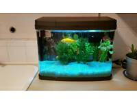 Fantastic 40 litre tank in perfect condition complete with fish and new heater