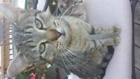 15 Month Old Cat Needs Her Forever Home