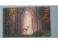 Canvas print of a stag