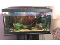 2ft fish tank.