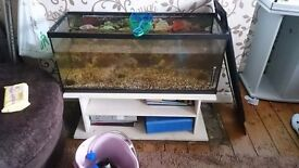 3 foot fish tank with working hood. Ely cardiff. £50