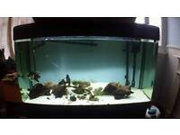 4ft Aquarium *** FULL SETUP READY TO GO ***