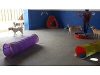 Let's Go Doggy Day Care