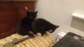 Adorable kittens looking for a good home £0.00