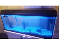 Jaguar and oscar cichlid, clown loach. Tetra filter, heater and thermostat. spare white bulb