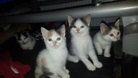 4 cute Kittens