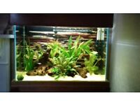 Solid Oak Fish Tank with fish! (Only 6 months old)