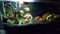African cichlids and 55gal tank. can sell fish separately.