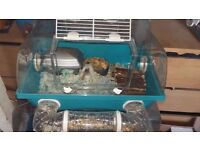 russian hamsters x5 with cages