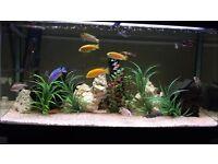 Aqua One AR-980 aquarium and stand - ONLY £130