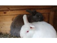 4 Rabbits with Hutches