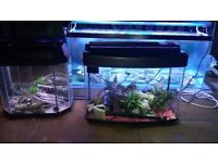 6 fish tanks for sale