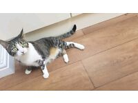 Gorgus tabby cat named princess . Neutured (free to good home)