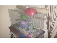 chinchilla /degu cage