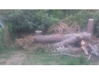 Large Tree Trunks for Free Pick UP