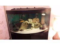Jewel trigon 350l corner aquarium swaps for 5f aquarium