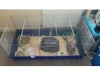 mini lop rabbit and cage