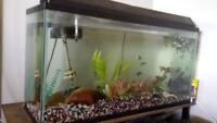 70 gallon fish tank with lobster