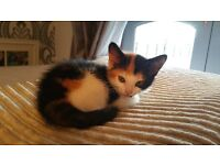 Still all avalible!!!!! Kittens 8weeks old flead and wormed ready to go know