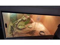 Bearded dragons with 3ft vivarium