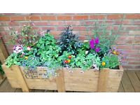 garden planter or raised bed rustic wood, stain or paint yourself