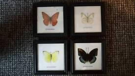 4 butterflies in frames