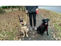 Dog Walking Service In Laindon Area (Dog Walkers)