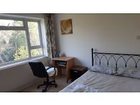 Bright double rooms are available to let from £475