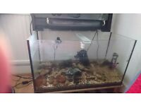 Fish Tank for Sale with gravel and water filter £50