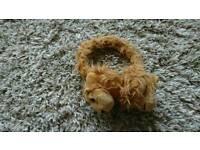 Cute lion ear muffins kids