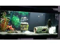 80 litre fish tank with stand