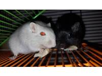 Two brothers for rehoming.