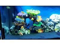 400 litre Juwel fish tank aquarium with ornaments and ocean roack