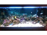 LAC Marine fish tank complete